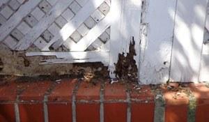 daños termitas