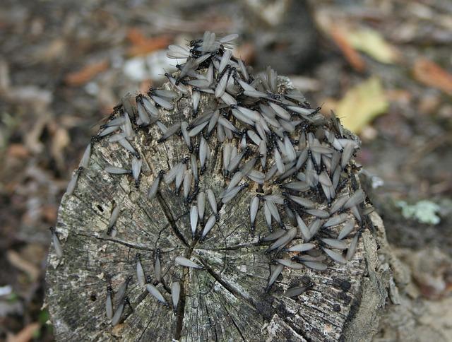 Descubre cómo son las termitas y por qué están en la madera