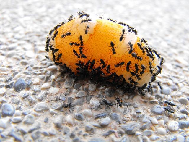 Plaga de hormigas: ¡insoportable!
