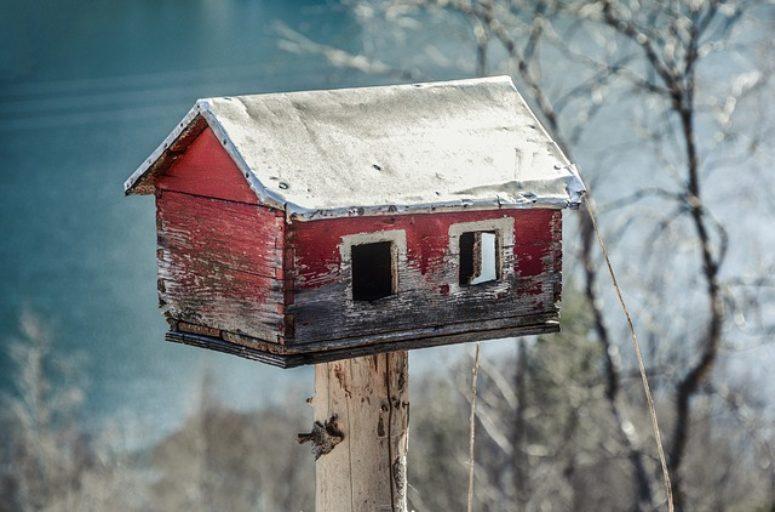 termitas madera