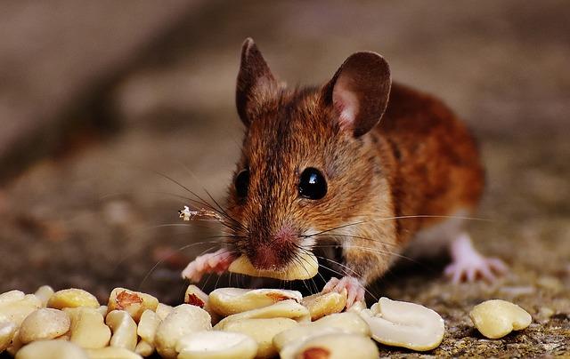¿Dónde se esconden los ratones?