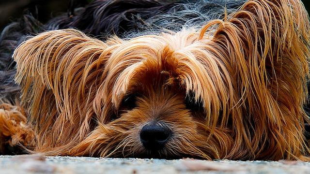 ¿Las pulgas de los animales pueden pasar a las personas?