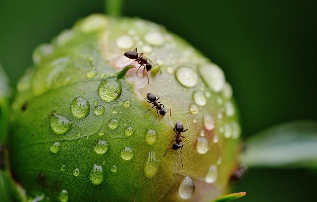 Hormigas en casa, ¿qué puedo hacer?