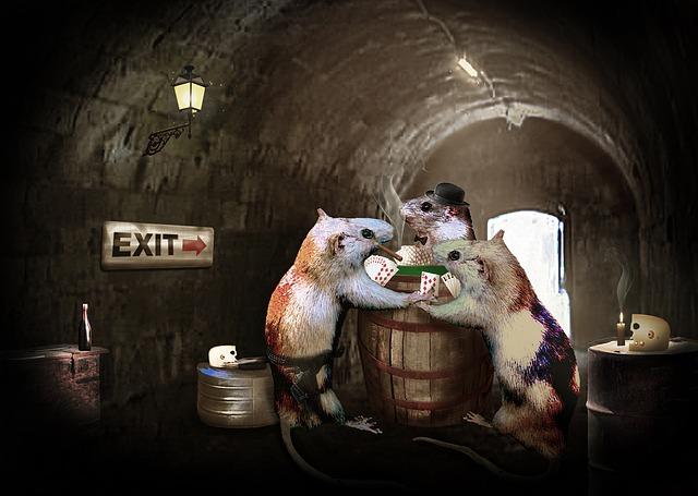Ratas: cómo son los controles de plagas de ratas