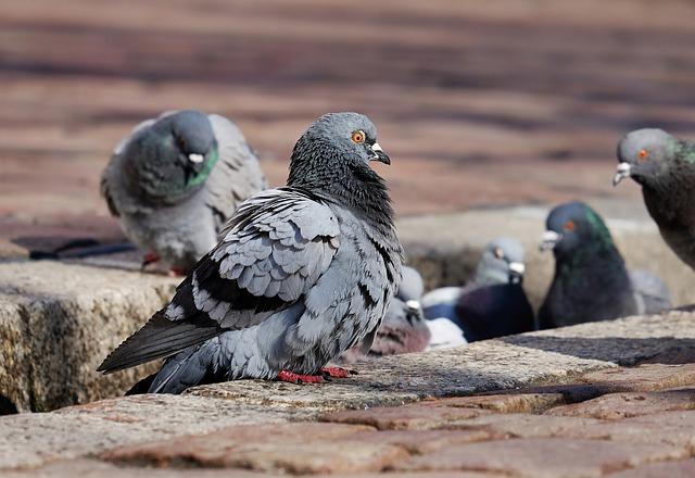 Cómo ahuyentar a las palomas de tu terraza o balcón