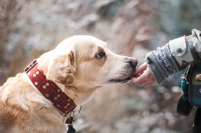 Protege y utiliza tu mascota como control natural de plagas