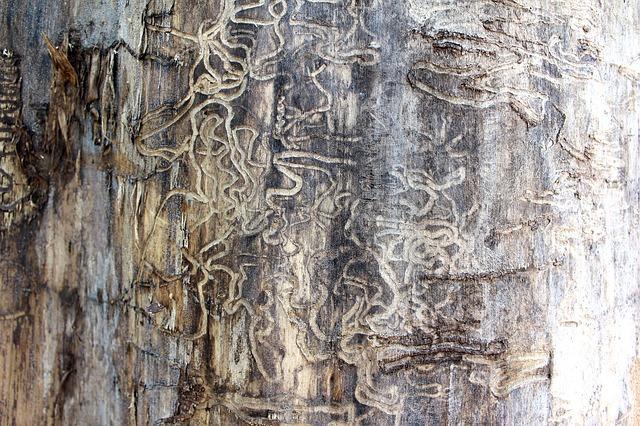 ¿Cómo  aparecen las termitas en los hogares y qué remedios hay?