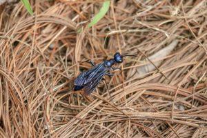 Hormigas voladoras