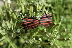 plagas insectos