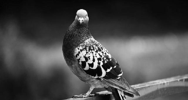 Cómo eliminar las palomas del tejado