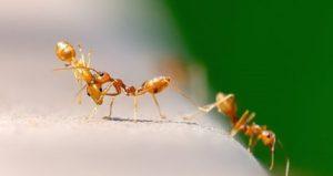 hormigas en casa sitehisa