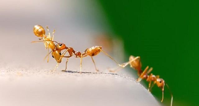 ¿Por qué hay hormigas en la cocina de mi casa?