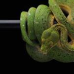 Serpiente Sitehisa