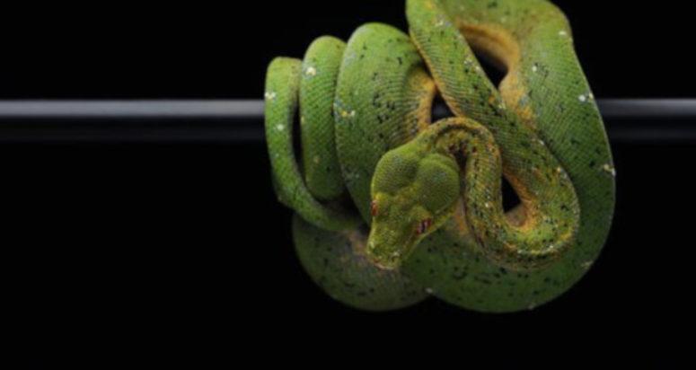 serpientes en el hogar