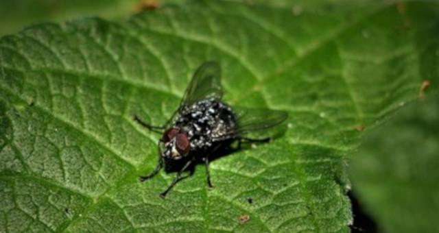 Cómo alejar las moscas de casa
