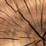 Hongos de la madera