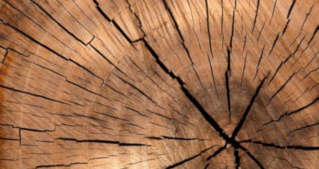 Cómo reconocer los hongos de la madera