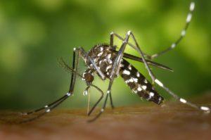 mosquito tigre bilbao