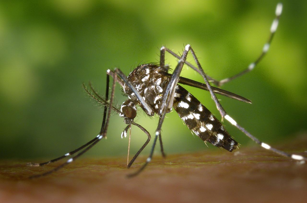 La importancia de las fumigaciones de mosquitos anuales en zonas de riesgo