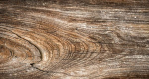 Hongos en la madera
