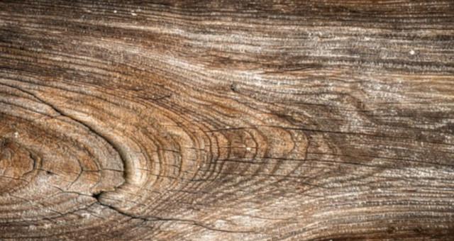 ¿Son peligrosos los hongos de la madera?
