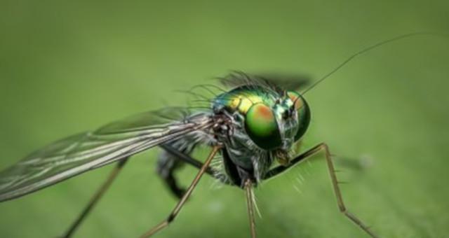 ¿Las moscas pican?