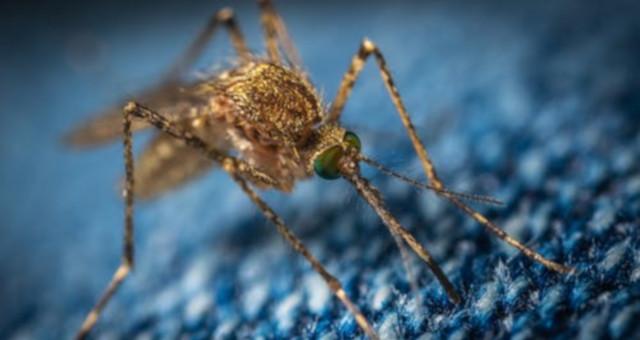 Tipos de mosquitos en España