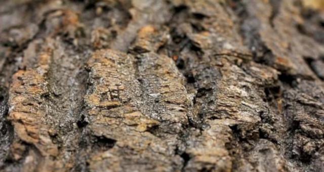 Como prevenir las termitas