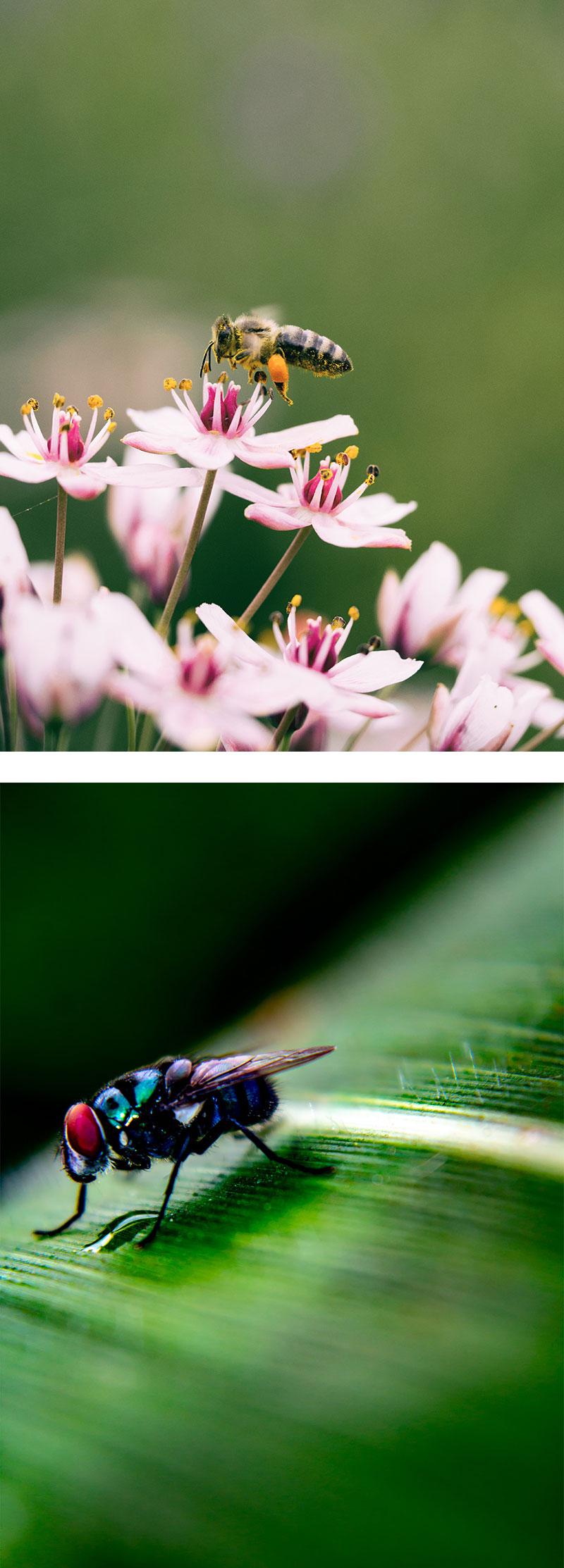 plagas-insectos