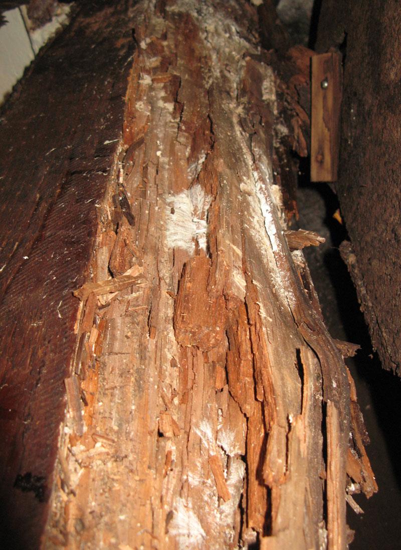 hongos-madera