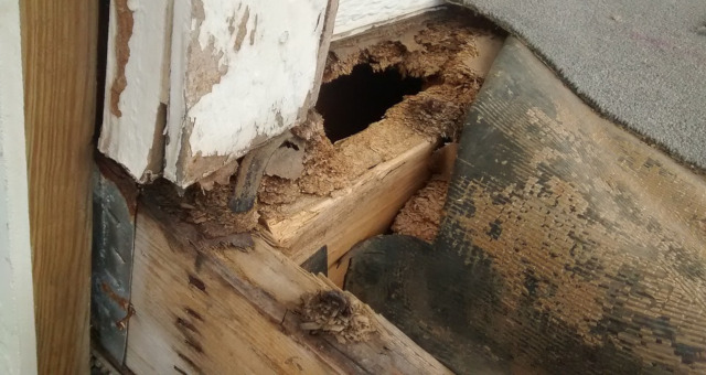 Cebos para termitas, ¿qué son?