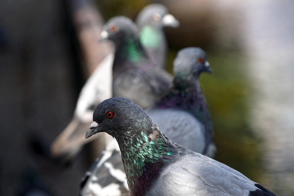 Cuando el control de aves se convierte en una necesidad