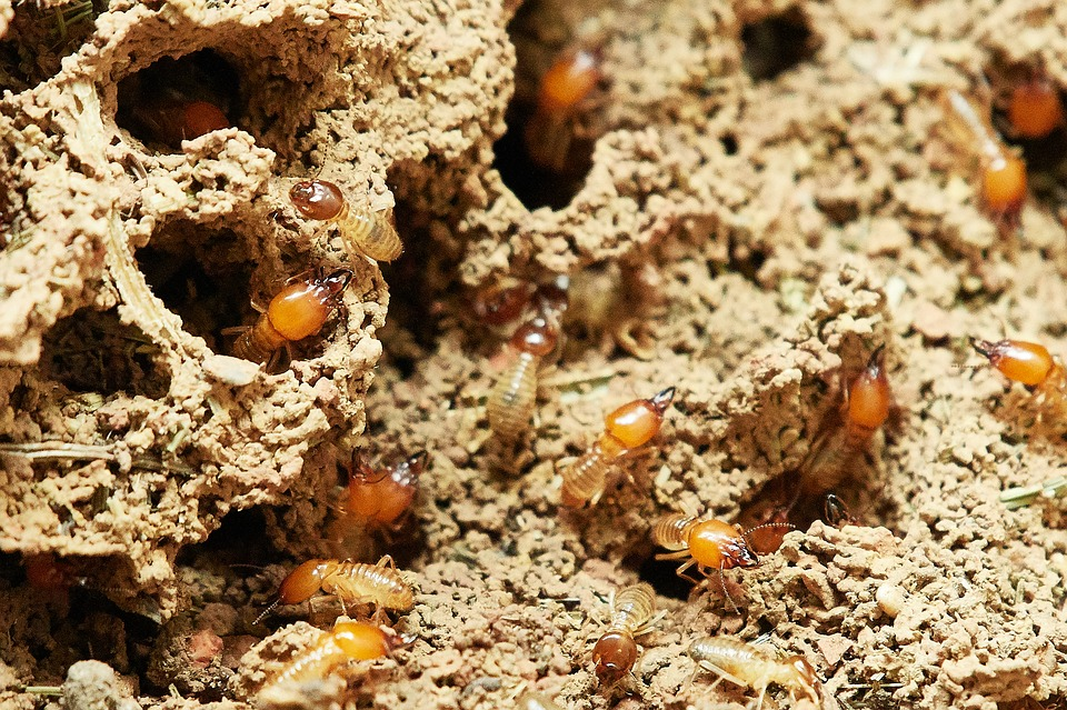 Exterminar las termitas, nuestro objetivo