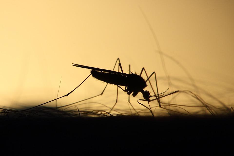 Las lluvias propagarán las plagas de mosquitos este verano
