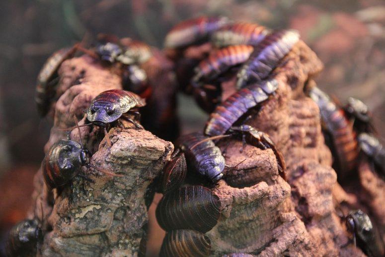 cucarachas verano