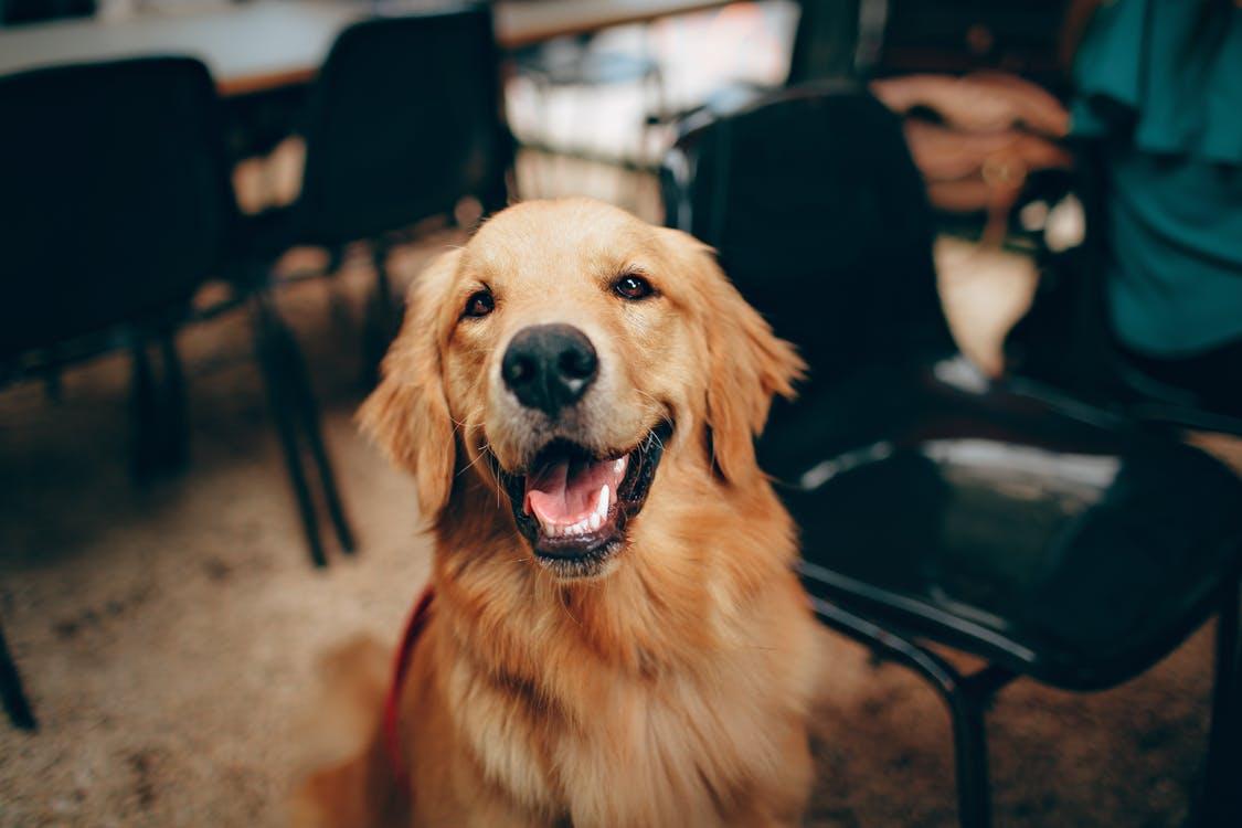 Aumentan las pulgas: cuida de tu mascota en verano
