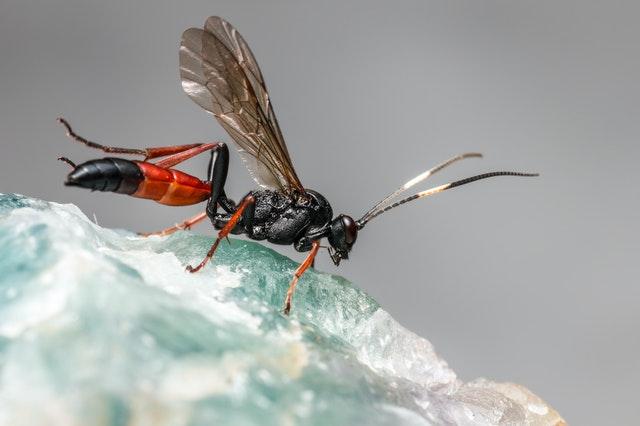 ¿Las moscas huyen del frío?