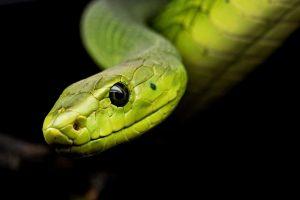 serpientes y culebras