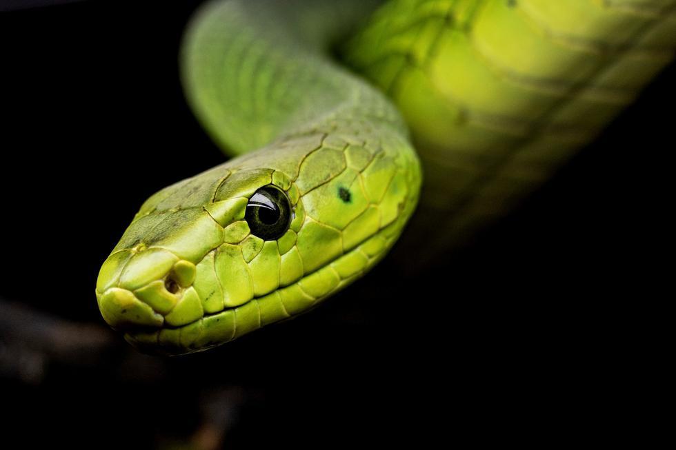 Serpientes y culebras ¿cuáles son sus diferencias?