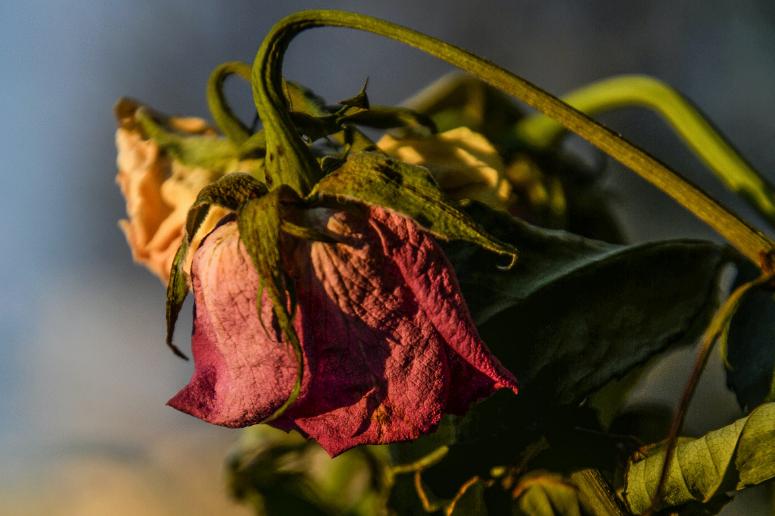 Cómo prevenir plagas en plantas