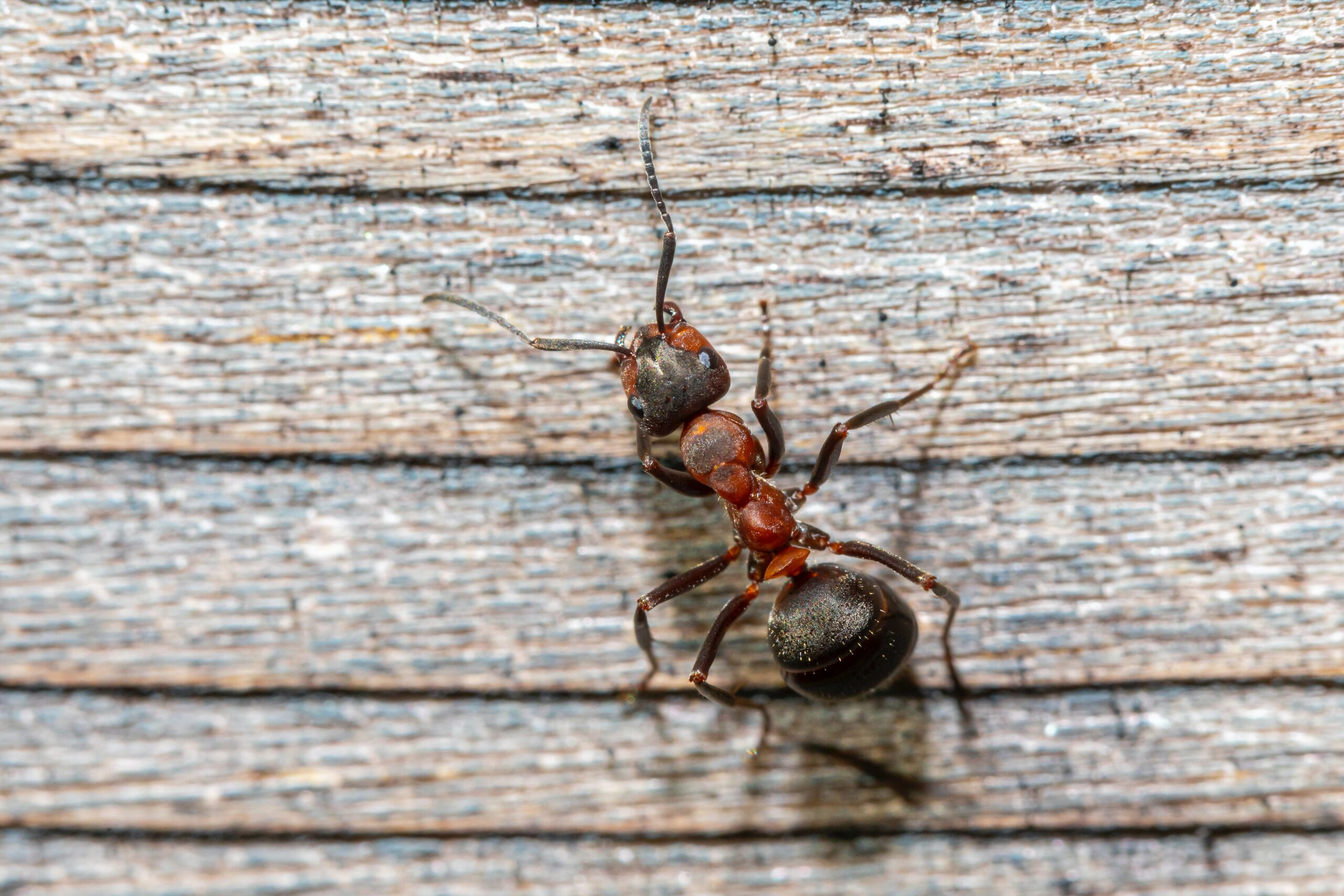 Hormigas en casa. Explicamos cómo evitar que se queden
