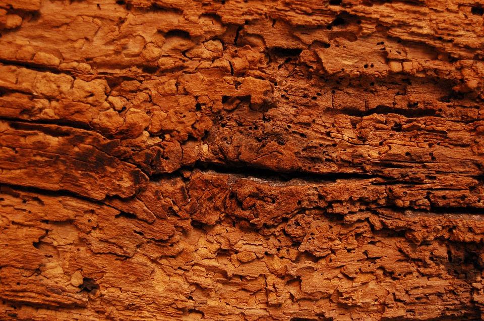 ¿Produce ruido la carcoma de la madera?
